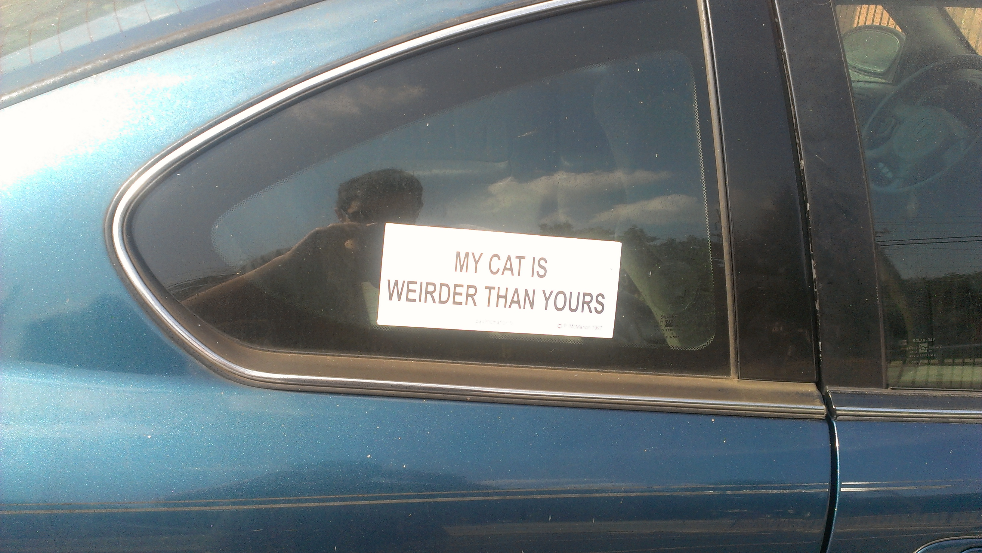 Sign location: Parking lot at Thinking Man, Decatur. Sign purpose: Making me laugh. Grade: F. Comments: My cat is infinitely superior to yours in every aspect and would beat up your cat for being weird.