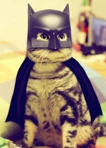 cat-wears-batman-costume