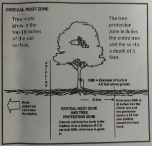 A diagram on one of the handouts I received last night.