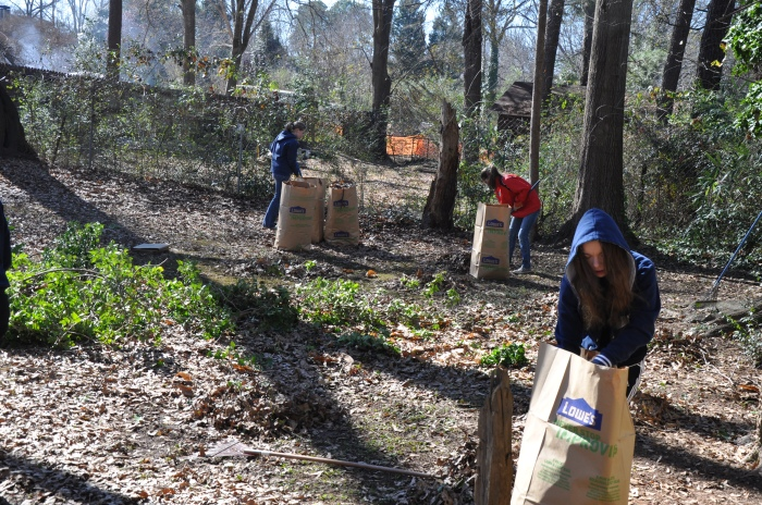 Jan. 18, 2014. Decatur High School students bag up leaves as part of the MLK Service Project. Photo by: Dan Whisenhunt